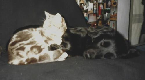 Aldo et Lola sieste