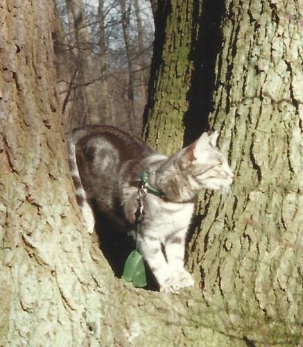 Lola dans les bois
